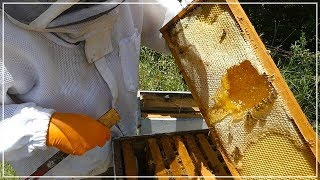 Download Beekeeper LOOKS FOR HONEY and finds THIS Video