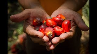 Download 100 Years Of Malaysian Palm Oil Video