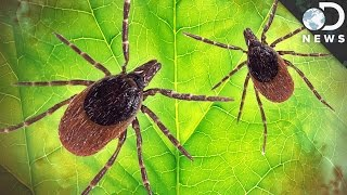 Download How Dangerous Is Lyme Disease? Video