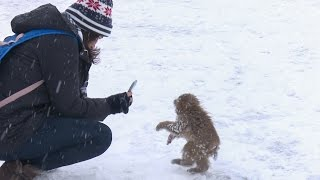 Download 【SNOW MONKEY】ニホンザル / 地獄谷野猿公苑 ☆Cute Baby☆ First Snow Life 6 Video