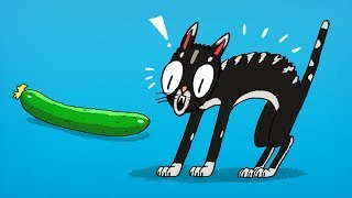 Download Why Cats Are Sooo Scared of Cucumbers? Video