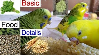 Download How To Budgies Food Eating Details / All The Basics Food Details Parakeet Video