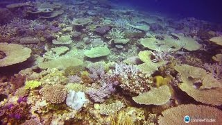 Download Record coral kill-off on Great Barrier Reef Video