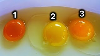 Download Which Egg Do You Think Came From Healthy Chicken? Video