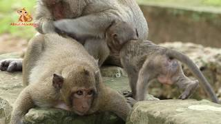 Download Baby Monkey Lori Wonder Face - What In Front Her Video