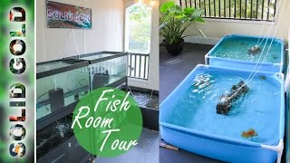 Download Solid Gold Fish Room Tour Video