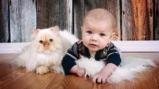 Download Cute Cats and Dogs Love Babies Compilation 2017 Video