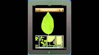 Download Leaf Snap Video
