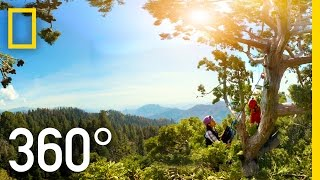 Download 360° Giant Sequoias on a Changing Planet – Part 2 | National Geographic Video