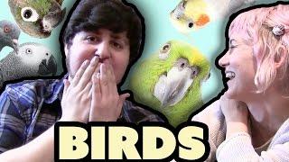Download JonTron Bird Buddies Video