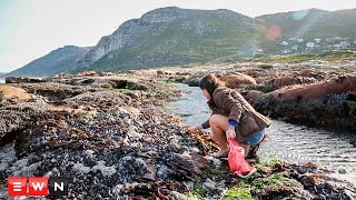 Download Coastal cuisine: Overlooked food on our rocky shores Video