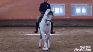 Download TRIANERO - Dressage schoolmaster PRE gelding - For Sale TBSH Video