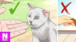 Download Wie Katzen Dir Ihre Zuneigung Zeigen! Video