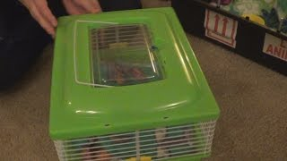 Download Unboxing of The Sugar Glider Video