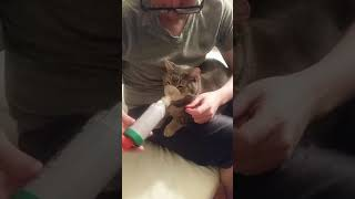 Download My asthmatic kitty cat getting his meds Video