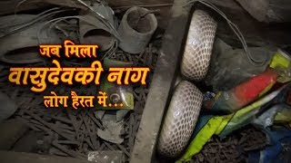 Download 20 साल पुराना सांप, असली नाग देवता Catching in a very dangerous situation with Albino cobra snake Video