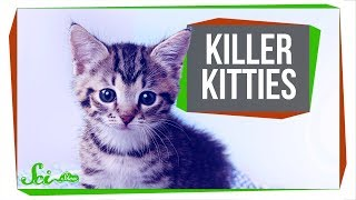 Download The Cat That (Maybe) Ate an Entire Species Video