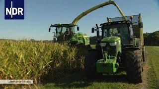 Download Herbst im Norden: Maisernte unter Hochdruck | die nordreportage | NDR Doku Video