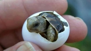 Download Sea Turtles Virginia.......Awesome stuff! Video