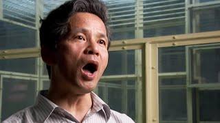 Download Scientist Speaks Chimp | Extraordinary Animals | Earth Video