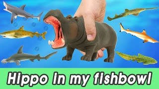 Download [EN] #61 hippopotamus in my fishbowl! kids education, Dinosaurs animationㅣCoCosToy Video