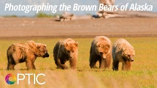 Download Optic 2016: Photographing the Brown Bears of Alaska with David Cardinal Video