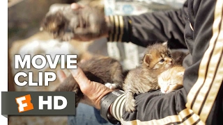 Download Kedi Movie CLIP - Abandoned Kittens (2017) - Documentary Video
