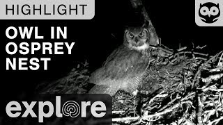Download Owl Invades the Osprey Nest at Night - Live Cam Highlight Video