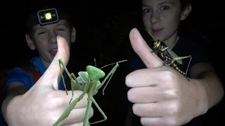 Download 4K Insects All Over: Grasshopper Punches & Ninja Mantis Moves. Fun Travel Nature Herping Fishing. Video
