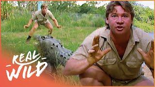 Download Crocs Down Under [Steve Irwin Documentary] | Real Wild Video