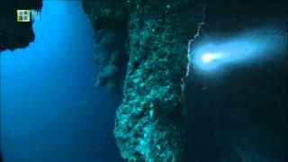 Download Belize Barrier Reef Reserve System (UNESCO/TBS) Video
