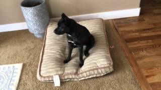 Download How To House Train (Housebreak) Your Puppy or Dog Video