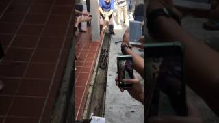 Download Snake in Ang Mo Kio on 19 April 2017 Video