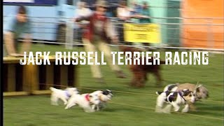 Download Jack Russell Terrier Racing Video