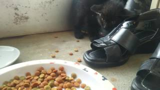 Download 野良猫を保護したら威嚇されたw Video