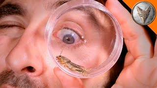 Download Mole Cricket Experiment! Video