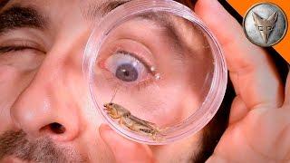 Download Mole Cricket Experiment! Video