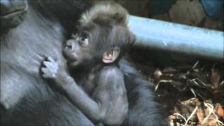 Download N'Aika @Burgers' Zoo with her baby (born 23 Nov 2013) Video
