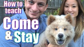 Download The Secret to Teaching Your Dog COME and STAY Video