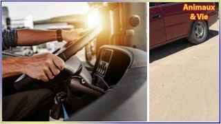 Download Le chauffeur voit quelque chose de bizarre sur la route, quand il comprend il freine le plus... Video