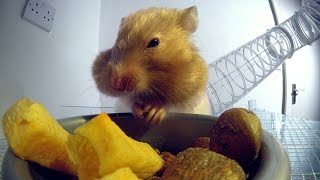Download Inside a hamster's cheeks | Pets - Wild at Heart: Episode 1 Preview | BBC One Video