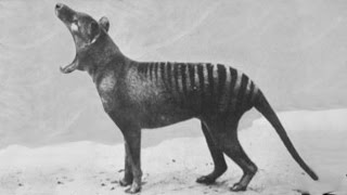 Download Rare footage of extinct animals Video