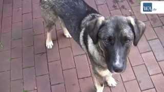 Download Tierheim Hamm 2: Fünf Hunde suchen Zuhause Video