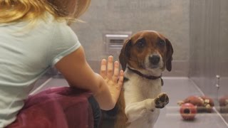 Download If this video about a shelter dog doesn't move you, check your pulse! Video