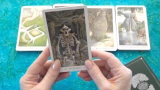Download Deck Review: Wildwood Tarot (+Trim) Video