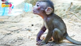 Download Poor Lola baby run to us for food & drink | Give water to Lola baby to drink | Monkey Daily 3166 Video
