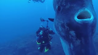 Download 5 Deep Sea Creatures Faced By Divers! Video