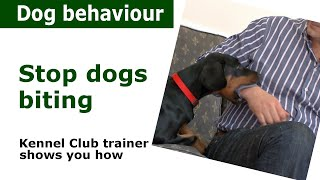 Download How to stop a puppy from biting | Expert advice from a Kennel Club expert Video