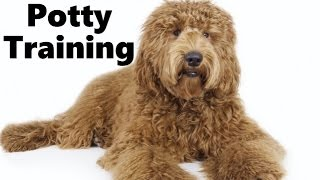 Download How To Potty Train A Labradoodle Puppy - Labradoodle House Training Tips - Labradoodle Puppies Video
