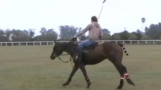 Download Balanced Position on the Horse | Augustin Merlos Video